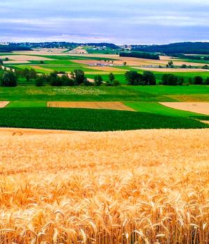 Natur erleben mit einer Ferienwohnung im Burgenland