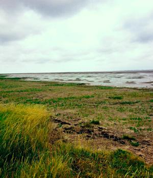 Natur erleben in Nordfriesland