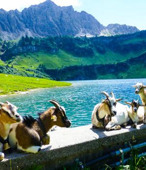 Natur erleben im Kurzurlaub im Tannheimer Tal
