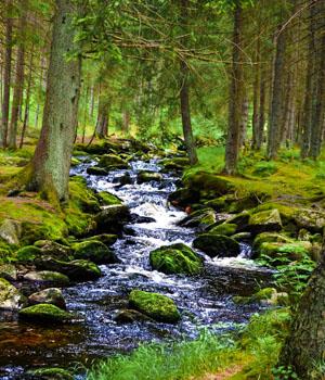 Natur genießen im Urlaub im Böhmerwald