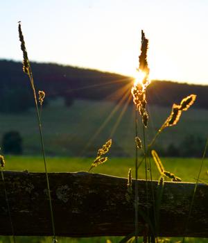 Schöne Momente im Urlaub im Böhmerwald