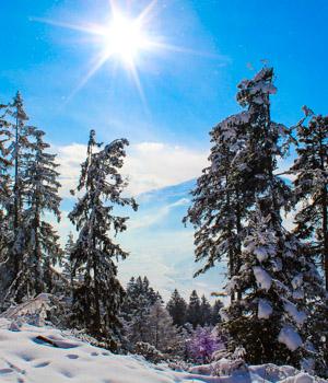 Wanderurlaub im Alpbachtal