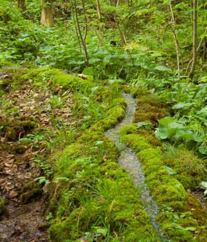 Natur genießen im Wanderurlaub im Steigerwald