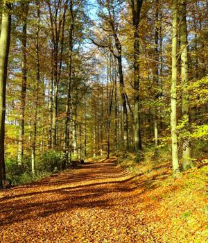 Schöne Momente im Wanderurlaub im Westerwald