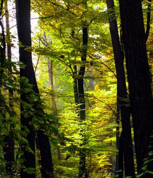 Wanderurlaub in den Wäldern in Baden-Baden