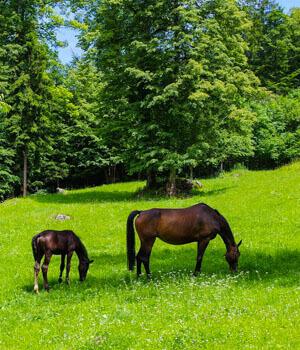 Schöne Momente im Wanderurlaub in der Fränkischen Schweiz