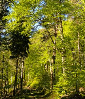 Natur genießen im Wanderurlaub im Odenwald