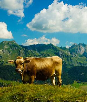 Schöne Momente im Wanderurlaub in der Ostschweiz