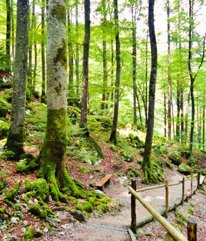 Freizeiturlaub im Harz
