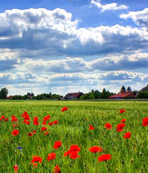 Ferienwohnung in Brandenburg