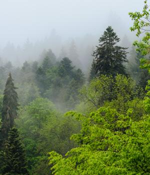 Natururlaub im Schwarzwald