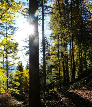 Natur genießen im Thüringer Wald