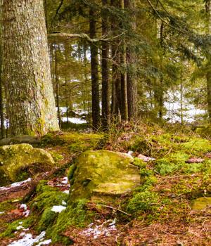 Freizeiturlaub im Schwarzwald