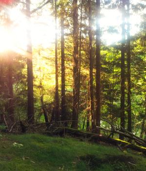 Natururlaub im Harz