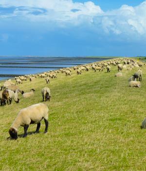 Natururlaub in Ostfriesland