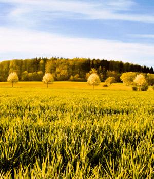 Natur in Rheinland-Pfalz