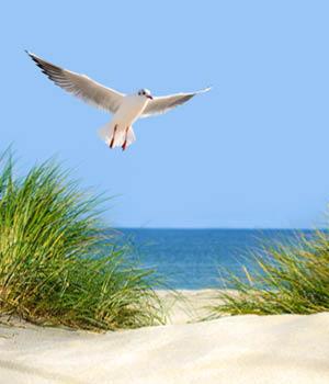 Natururlaub an der Ostsee