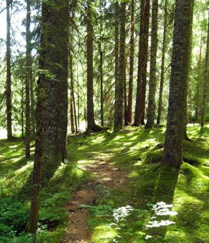 Sehenswertes im Schwarzwald