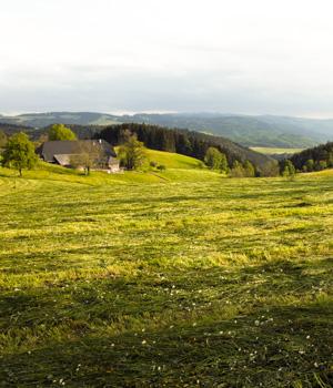 Schöne Momente im Schwarzwald
