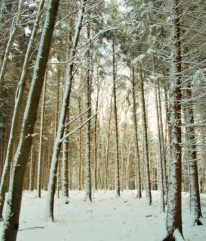 Skiurlaub im Bayerischen Wald
