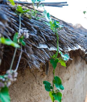 Natur erleben im Urlaub im Reetdachhaus