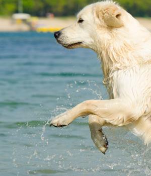 Freizeitaktivitäten mit dem Hund an der Ostsee