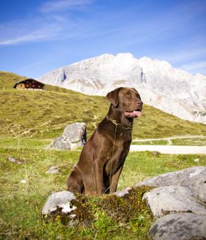 Freizeitspaß im Urlaub mit Hund in Bayern