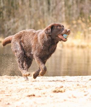 Freizeitaktivitäten im Urlaub mit Hund auf Rügen