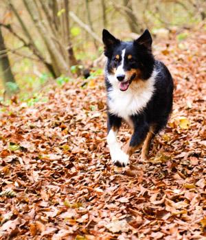 Freizeitspaß im Urlaub mit Hund im Schwarzwald