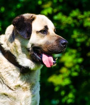 Natur erleben im Urlaub mit Hund im Schwarzwald