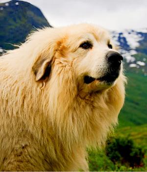 Natur erleben im Urlaub mit Hund im Allgäu