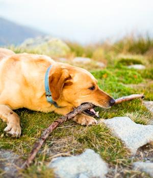 Freizeitspaß im Urlaub mit Hund im Allgäu