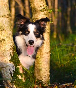 Urlaub mit Hund im Bayerischen Wald