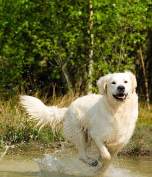 Freizeitaktivitäten im Urlaub mit Hund im Harz