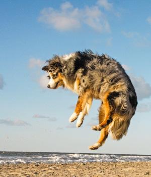 Freizeitaktivitäten im Urlaub mit Hund auf Sylt