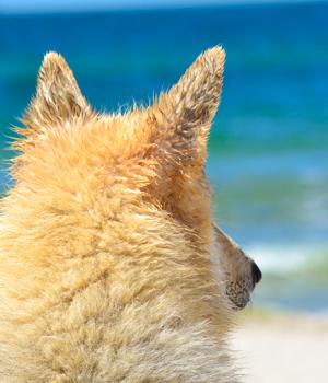 Natur genießen im Urlaub mit Hund auf Sylt