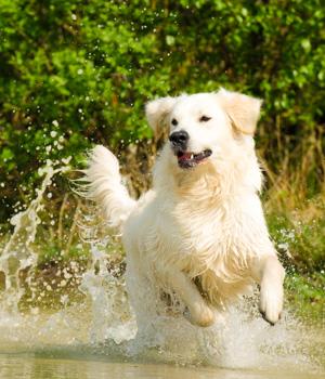 Urlaub mit Hund an der Mecklenburgischen Seenplatte