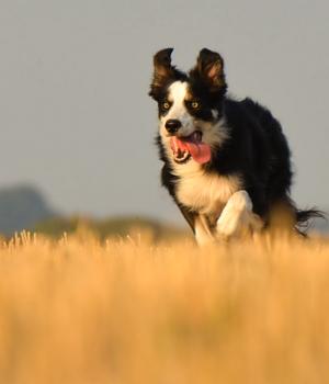 Urlaub mit Hund auf Fehmarn