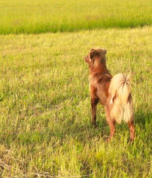 Natur erleben im Urlaub mit Hund auf Fehmarn