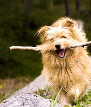 Freizeitspaß im Urlaub mit Hund auf Fehmarn