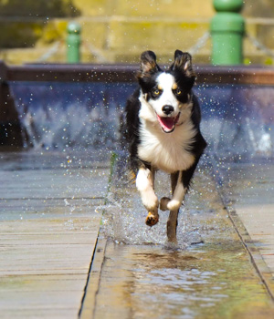 Urlaub mit Hund in Ostfriesland