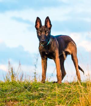 Natur erleben im Urlaub mit Hund in Ostfriesland
