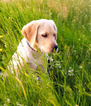 Freizeitspaß im Urlaub mit Hund im Sauerland