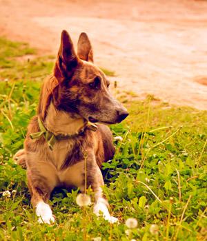 Urlaub mit Hund in Thüringen
