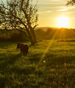 Natur erleben im Urlaub mit Hund in Brandenburg