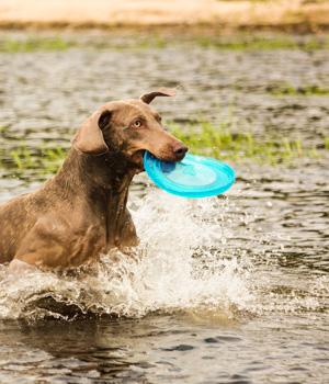 Freizeitspaß im Urlaub mit Hund in Brandenburg