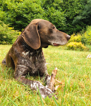 Natur genießen im Urlaub mit Hund in Schleswig-Holstein
