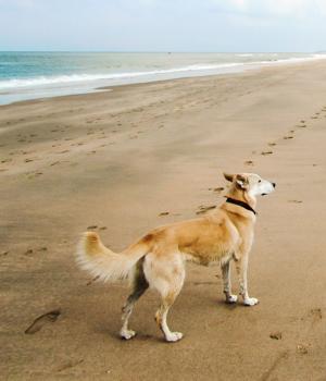Urlaub mit hund auf amrum online bei hrs holidays schnell for Ferien auf juist mit hund