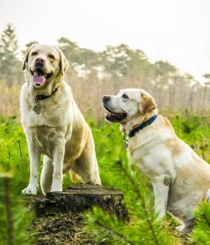 Freizeitspaß im Urlaub mit Hund in Baden-Württemberg