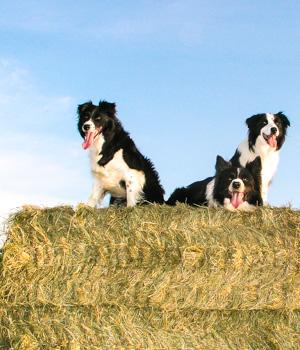 Natur erleben im Urlaub mit Hund in Niedersachsen